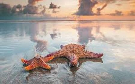 Hình ảnh sao biển dạt lên bờ