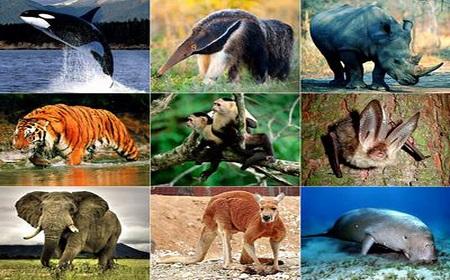 Hình ảnh về một số loài động vật quý hiếm trong Sách Đỏ
