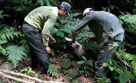 Kiểm lâm thả động vật quý hiếm về rừng