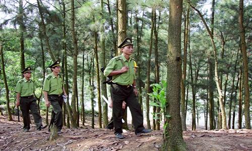 Kiểm lâm tuần tra bảo vệ rừng và động vật hoang dã