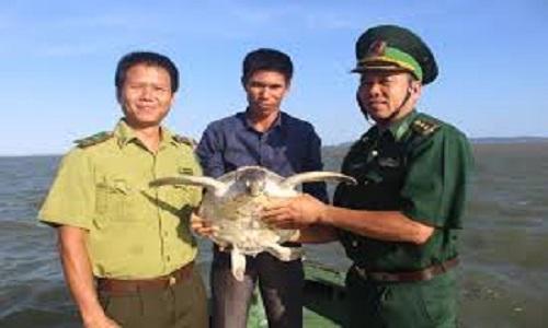 Kiểm lâm Việt Nam thả con vích biển về tự nhiên
