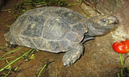 Rùa núi nâu sinh sống ở những nơi ẩm thấp