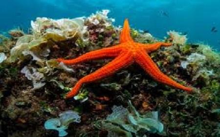 Sao biển có biết bơi không?